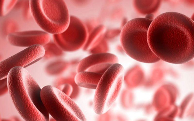 Hematología V Región: Mayor cobertura en la medida de lo posible