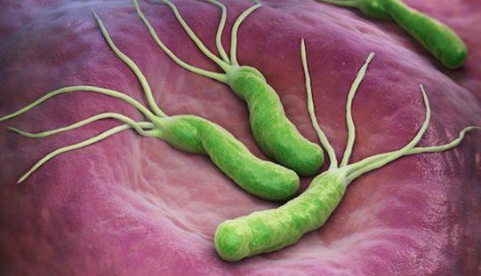 Sociedad Chilena de Gastroenterología promueve método de detección no invasivo para Helicobacter Pylori