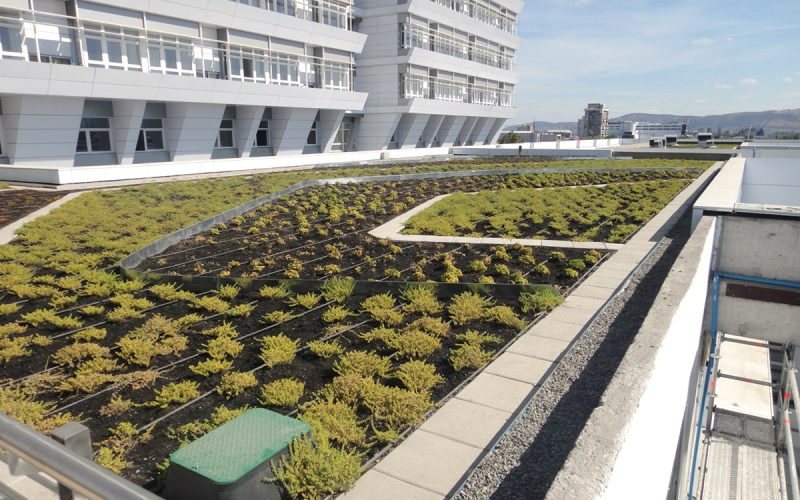 8H: Áreas verdes en recintos de salud ayudan a la recuperación del paciente